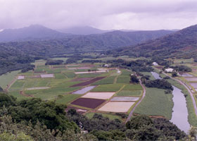 Wideangle view of farms in the inland part of Hanalei Valley