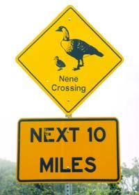 Nene Crossing sign on Haleakala Crater Road