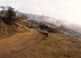 Waipoli Road to Polipoli Spring SRA